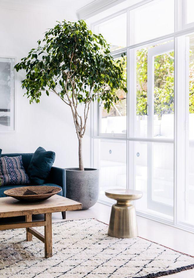 albero decorazione interno