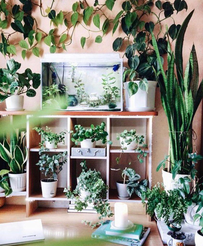 piccole piante verdi